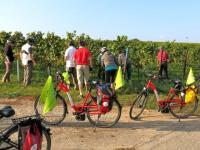 Weinreisen  und Weinradtouren  zur  Weinlese mit  genussradeln-pfalz