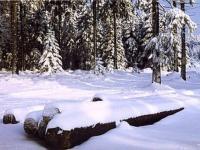 Skiwandern im Thüringer Wald
