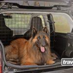 Hunde in Kleinwagen sicher transportieren
