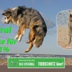 TIERSCHUTZ hier! überzeugt in Thüringen