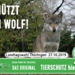 Schluss mit dem Irrsinn - Schützt den Wolf