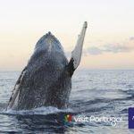 Sanftes Whale Watching auf den Azoren