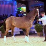 Spitzenumsatz auf der 15. Internationalen Springpferdeauktion von Hetzel Horses