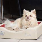 GEL-Hundebettchen Compact Style