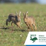 Wildtier-Informationen für jedermann