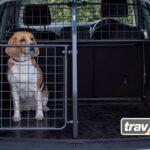 Hunde mit einem modularen Transportsystem im Auto sichern