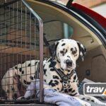 Im E-Auto sicher mit Hund unterwegs