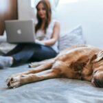 Aktueller denn je: Der neue Home Office Alltag