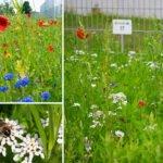 terminic goes green(er): Die terminic GmbH schafft für Wildbienen eine Blühwiese und setzt sich erneut für den Erhalt der Artenvielfalt ein
