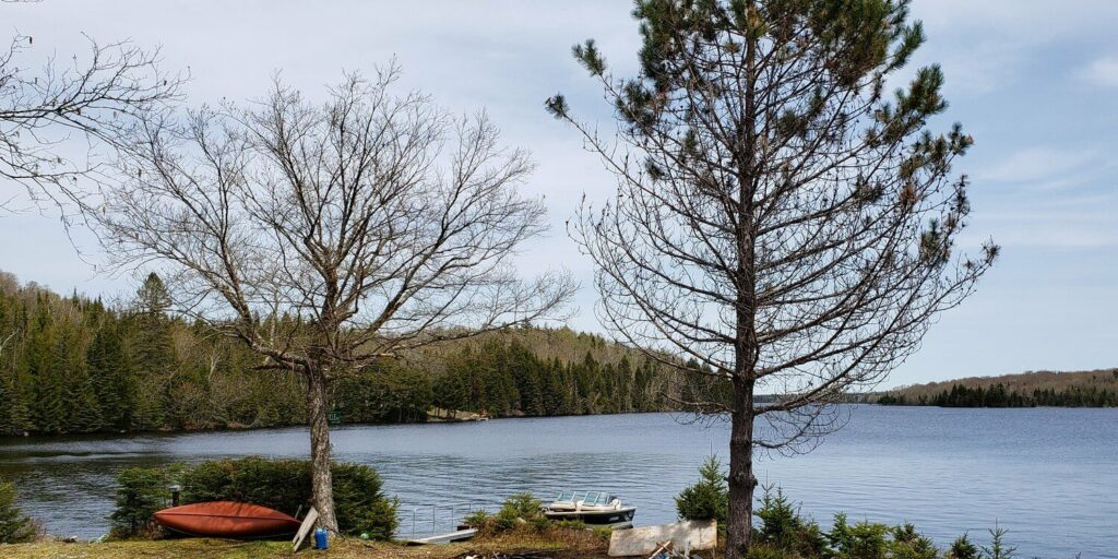 CAN Petermann 2019.06 Grant Lake in Fredericton aq 300 tiny-a2b1a4f1